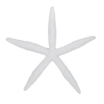 Sand Dollar Starfish Wall Decor Hobby Lobby 1305804